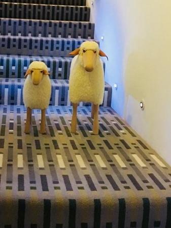 Brintons at Wool Fusion